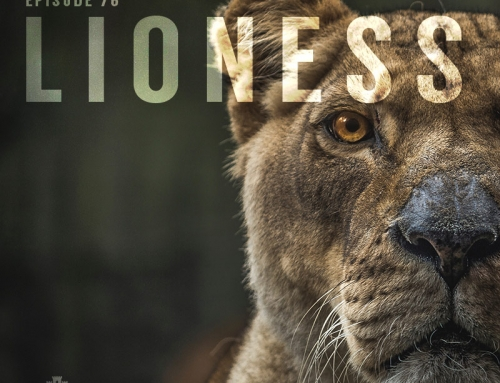 76-Greek Myths: Lioness