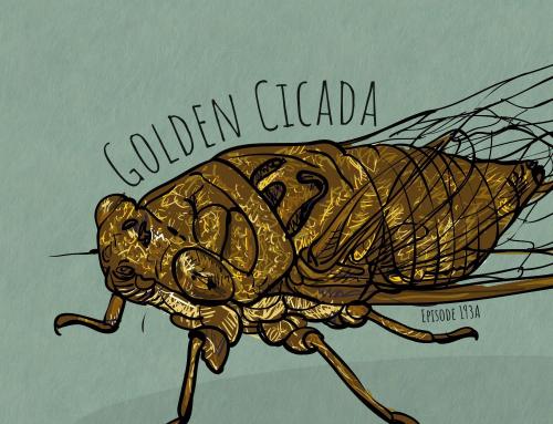 193A-Monkey King: Golden Cicada